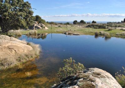 Wetlands Route